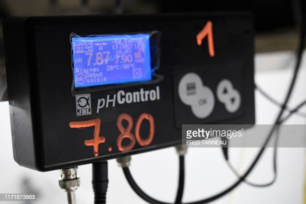 In this photograph taken on September 20 indicators illuminate a device to control the acidity of saltwater in tubes containing oyster larvae at...
