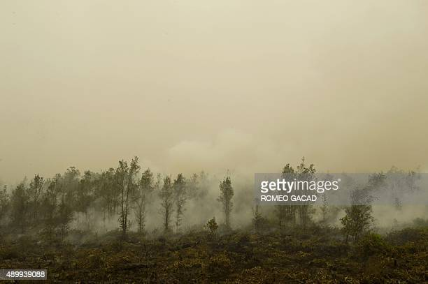 In this photograph taken on September 24 show a vast burning peat land forest in Jabiren Raya district in Central Kalimantan province on Borneo...
