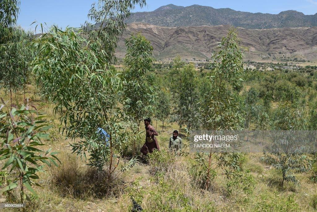 DOUNIAMAG-PAKISTAN-ENVIRONMENT-TREES : News Photo