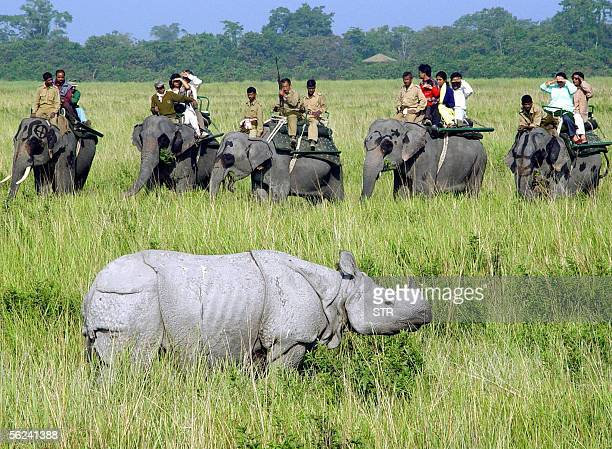 In this picture taken 10 December 2004 elephany mounted tourists watch a onehorned rhinoceros during an elephant safari in Kaziranga National Park in...