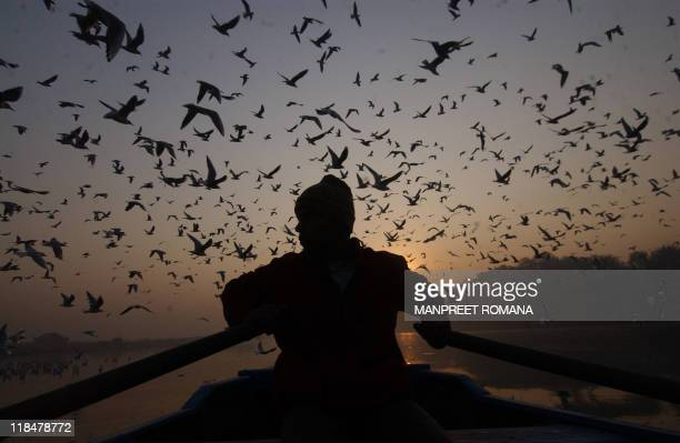In this picture taken 29 November 2005 Indian boatman Surendra rows in the polluted waters of The River Yamuna in New Delhi The Yamunaconsidered one...