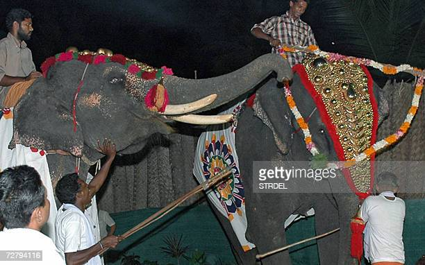 In this picture taken in Kovalam some 13 Kms south of Thiruvananthapuram late 10 December 2006 two captive elephants dressed up as bride and groom...