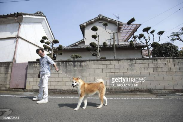 In this picture taken on April 3 2018 Japanese Akita dog breeder Osamu Yamaguchi walks his dog Akane on a street in Takasaki Gunma prefecture...