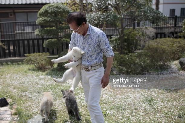 In this picture taken on April 3 2018 Japanese Akita dog breeder Osamu Yamaguchi holds Yukine an Akita puppy at his centre in Takasaki Gunma...