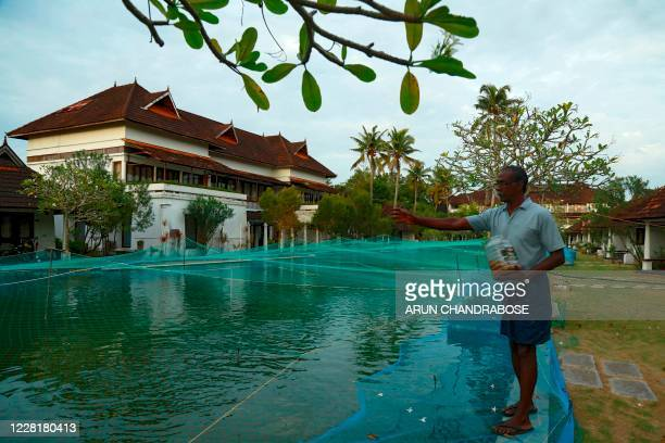 In this picture taken on August 23 a member of resort staff feeds fish in a swimming pool that has been turned into a fish farm at Aveda Resort in...