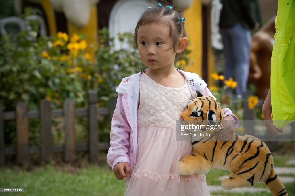 In this picture taken on August 25, 2017, a girl holds a Siberian tiger toy at the Hengdaohezi Siberian Tiger Park in Hengdaohezi township on the outskirts of Mudanjiang. While Chinese rangers and conservationists work to increase the Siberian tigers' population in the wild, the country also hosts about 200 captive tiger breeding centres, but many have been embroiled in controversy. Parks like Hengdaohezi have repeatedly come under fire from conservationists who accuse them of being 'tiger farms' that breed the endangered cats for profit with no intention of returning them to the wild. / AFP PHOTO / Nicolas ASFOURI / TO GO WITH China-conservation-animal, FEATURE by Yanan WANG