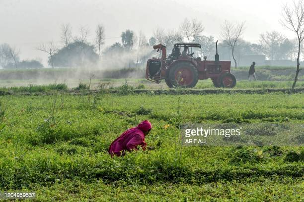 In this picture taken on February 23 officials of the Agriculture Department on a tractor spray pesticides to kill locusts as a farmer works in a...