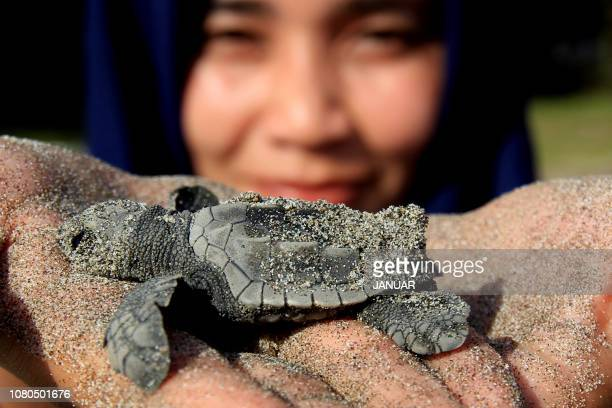 In this picture taken on January 10 2019 a student holds a baby turtle before being released into its habitat on the turtle conservation Aroen...