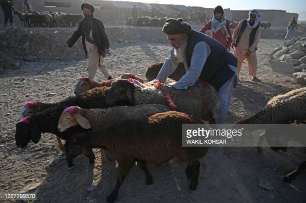 In this picture taken on July 22 a livestock vendor waits for customers to sell goats and sheep ahead of the Muslim festival Eid al-Adha or the...
