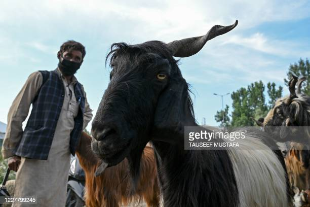 In this picture taken on July 24 a livestock vendor wearing a facemask waits for customers to sell goats ahead of the Muslim festival Eid al-Adha or...