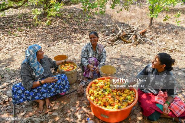 In this picture taken on March 13 workers chat as they take a break after harvesting cashew apples at a farm belonging to the Madame Rosa distillery...