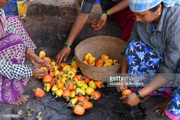 In this picture taken on March 13 workers separate cashew nuts from apples at a farm belonging to the Madame Rosa distillery at Pilerne in North Goa....