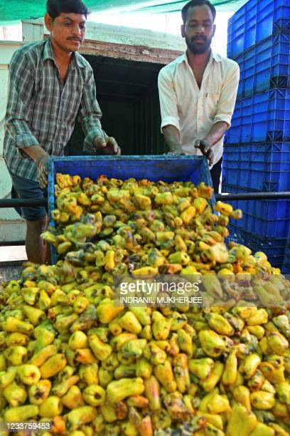 In this picture taken on March 13 workers unload crates of ripe cashew apples for crushing onto a machine at the Madame Rosa cashew farm at Thivim in...