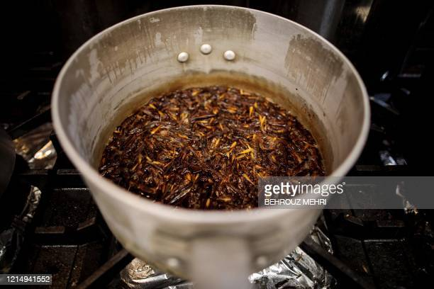 In this picture taken on May 13 2020 dried grasshoppers are seen in a pot before being cooked as a dessert side dish as part of cricket ramen...