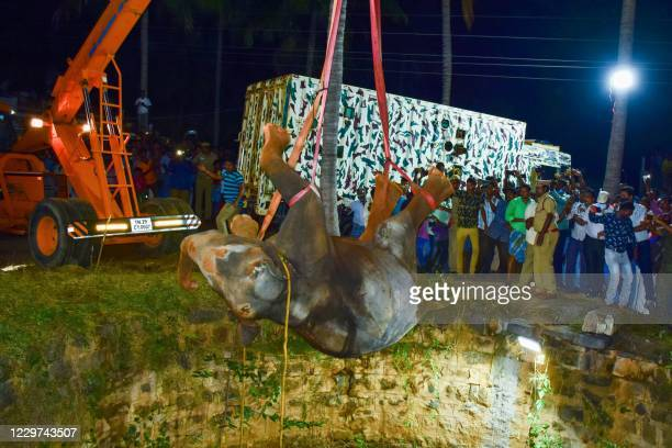 In this picture taken on November 19 forest officers and firefighters use a crane to pull an elephant to rescue after it fell in a deep well in...