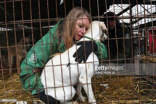 In this picture taken on November 28 Lola Webber of the Humane Society International interacts with a dog in a cage at a dog farm during a rescue...