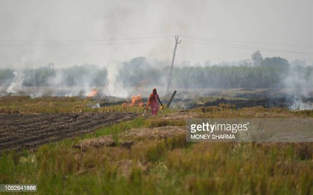In this picture taken on October 16 a woman walks near burning straw stubble at a field in Barana village in the northern Indian state of Haryana...