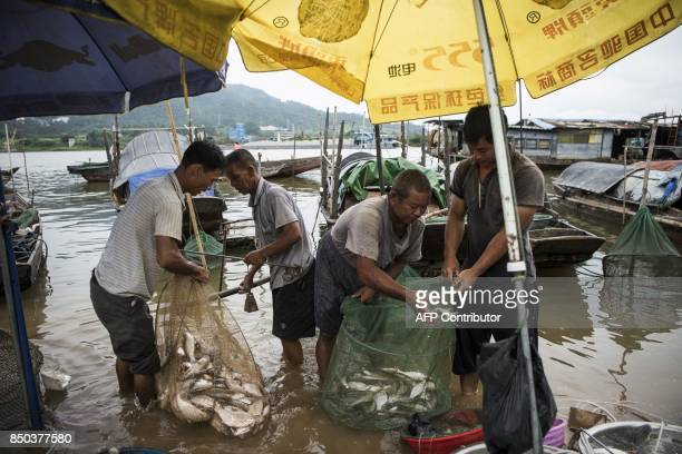 In this picture taken on September 7 men from the Tanka community prepare fish for sale in Datang in southern China's Guangdong province Along...