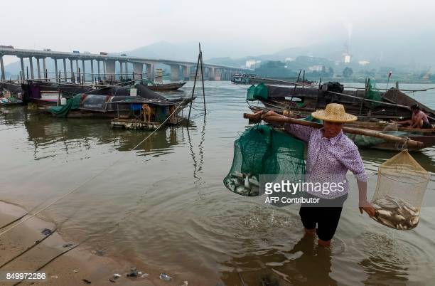 In this picture taken on September 8 a woman from the Tanka community carries nets filled with fish to sell in Datang southern China's Guangdong...