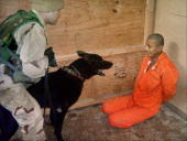 In this undated still photo an iraqi detainee at abu ghraib prison picture id51038833?s=170x170