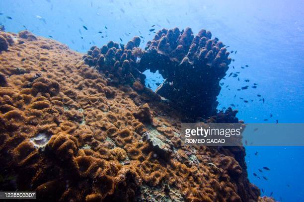 In this underwater photo taken on August 19, 2020 coral reefs are seen off Koh Tao island in the Gulf of Thailand.
