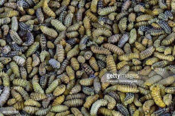 In Ziro, Arunachal Pradesh, edible silk worms are for sale on the local market. They taste... Unfamiliar, but are better than one could have thought!
