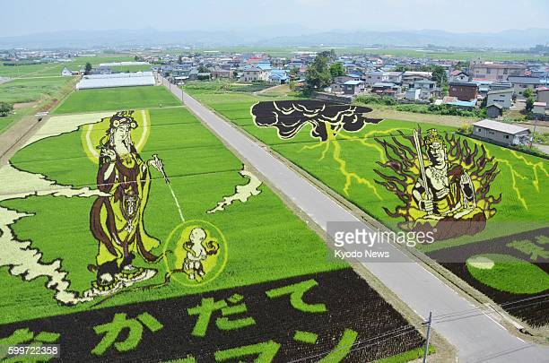 Inakadate Japan Photo taken July 30 shows pictures and letters depicted in rice paddies by planting rice species of different colors in Inakadate...