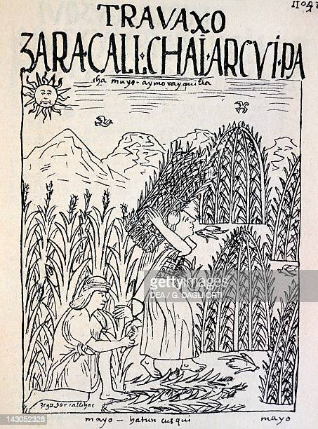 Incas working in the fields during the month of May Engraving from New Chronicle and Good Government by Felipe Guaman Poma de Ayala 1587 manuscript...
