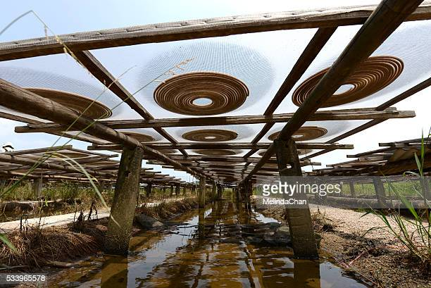 incense coils drying under the sun in the chinese village - incense coils stock photos and pictures