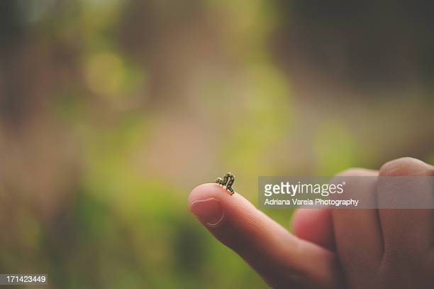 Inchworm on a child's finger