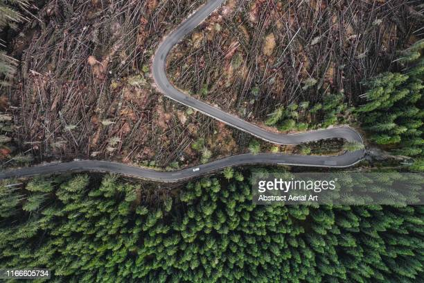 incredible perspective showing destruction to a forest caused by a storm photographed by drone, dolomites, italy - deforestation stock pictures, royalty-free photos & images