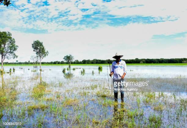 Indalecio Ojeda peasant from the village of La Esperanza is seen in Cinaruco Arauca Colombia on July 31 2018 In summer the estuaries dry up...