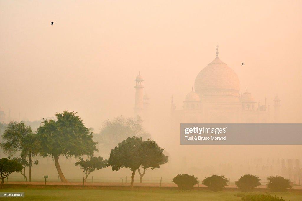 India, Agra, Taj Mahal : ストックフォト