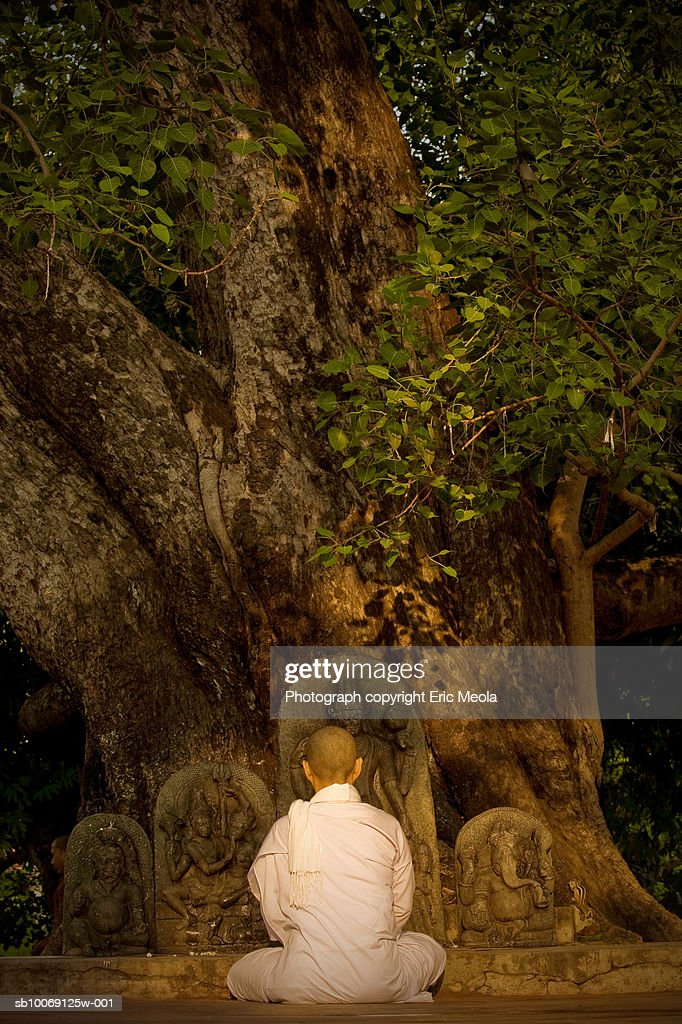 India, Bodh Gaya, Buddhist monk praying in front of sacred bodhi tree : Stockfoto