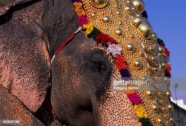 India Cochin Elephant Welcoming Tourists