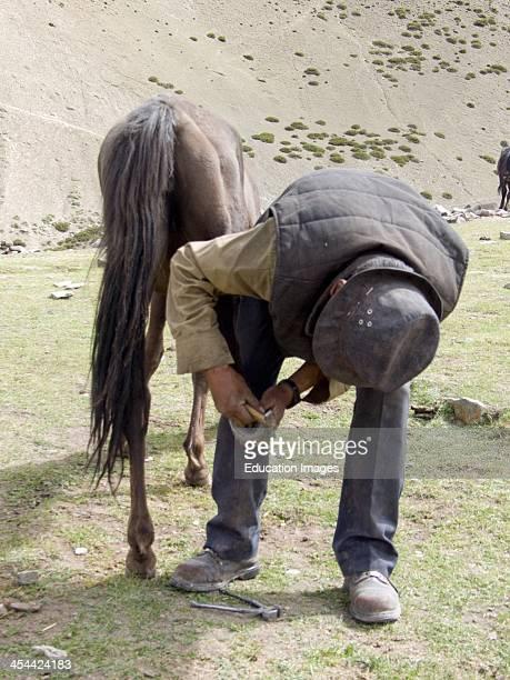 India Jammu And Kashmir State Ladakh Region High Altitude Trek Camp Site At Shang Phu 4147 Meters