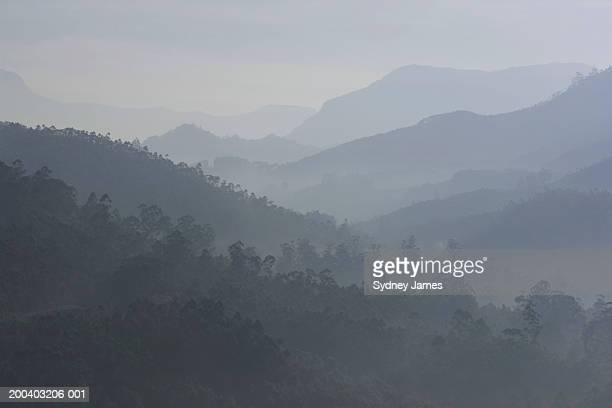 India, Kerala, Western Ghats Mts., tea plantations, dusk