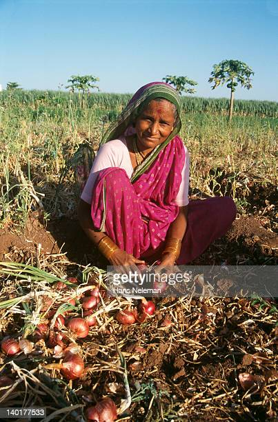 India, Maharashtra, Pune, Farmer sorting onions in field