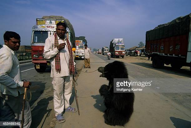 India, Near Delhi, Sloth Bear Trained As Dancing Bear.