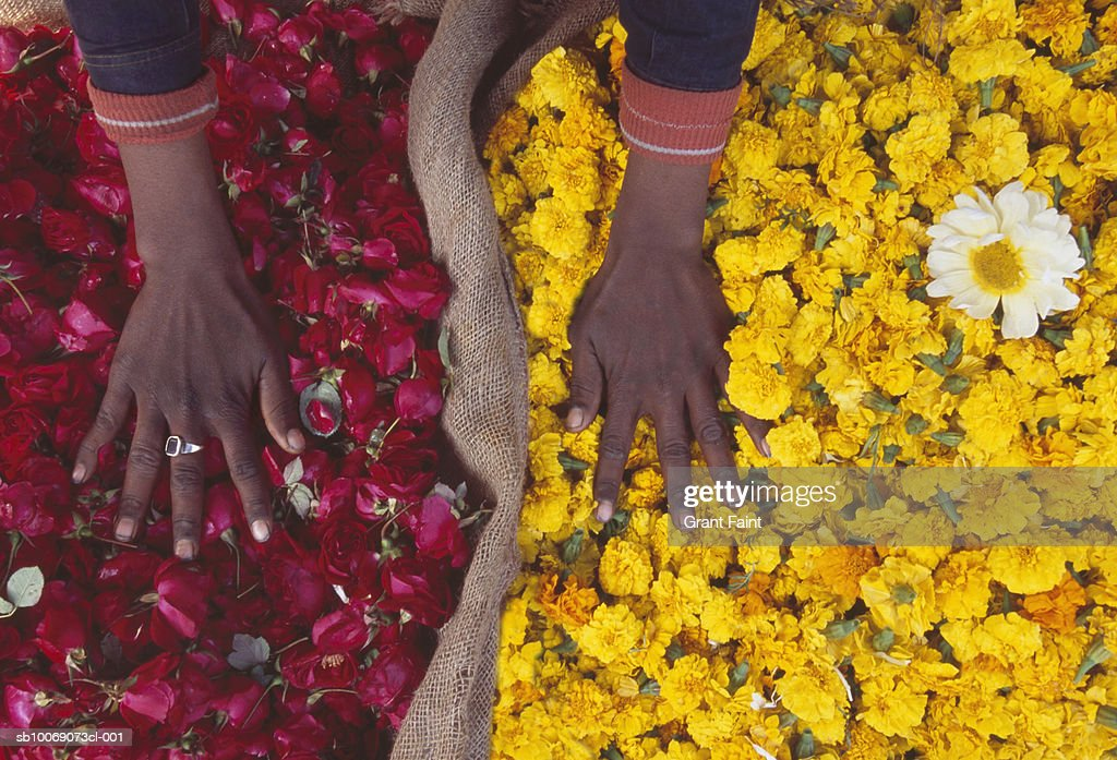 India, New Delhi, market sellers hands on dry flowers in sacks, elevated view : Stockfoto