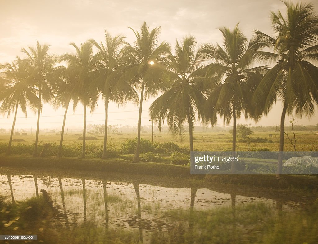 India, Palm trees Reflecting on water : Stockfoto