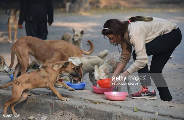 India resident Tina Oshan feeds street dogs in a parking area in New Delhi on December 27 2017 Tina feeds the pack of stray dogs every day before...