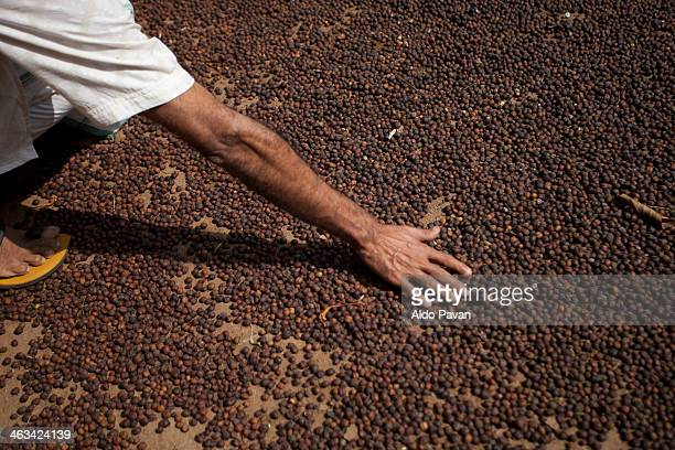 India, Wayanad, coffee drying