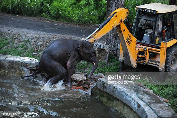 Indian army personnel use a bulldozer during a rescue mission to save a wild elephant trapped in a water reservoir tank at Bengdubi army cantonment...