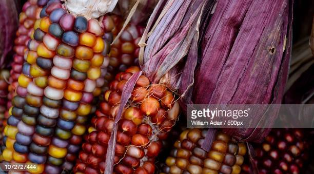 indian corn - indian corn stock photos and pictures