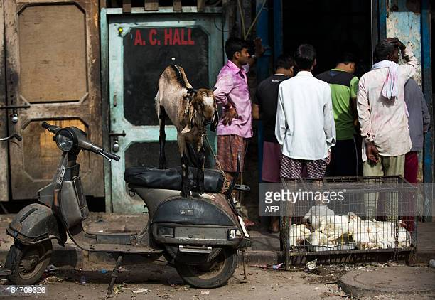 Indian customers buy meat as a goat stands on a motorcycle during Holi celebrations in New Delhi on March 27 2013 'Holi' the Festival of Colours is a...