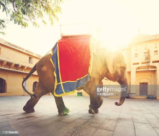 elefante indiano de jaipur - hinduísmo - fotografias e filmes do acervo