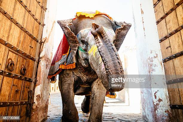 indian elephant running archway amber palace - indian elephant stock pictures, royalty-free photos & images