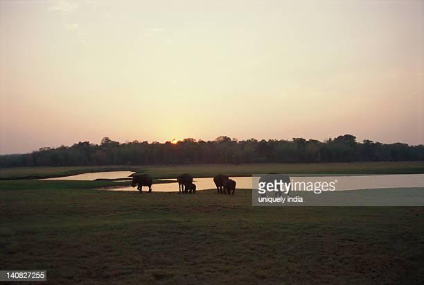 Indian elephant (Elephas maximus indicus) standing with its calf near a waterhole, Bandipur National Park, Chamarajanagar, Karnataka, India
