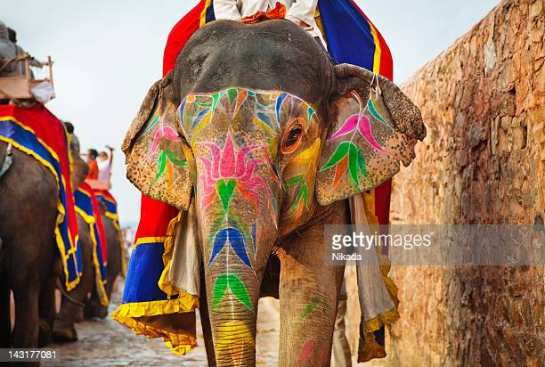 indian elephants in jaipur - indian elephant stock pictures, royalty-free photos & images